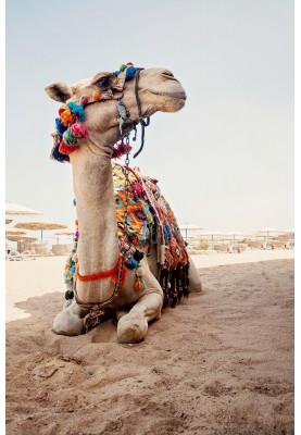 Египет! Горящие туры на вылет 18 января из Кишинева!